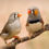 Treating Gizzard Worms and Tapeworms in Finches
