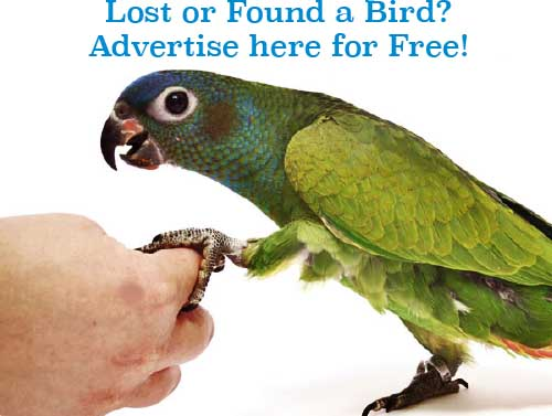 Lost/Found | Avizandum Birdkeeping Magazine